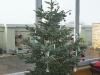 2012-12_weihnachten-011